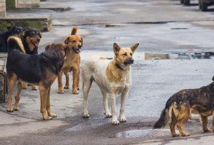 street dogs threat