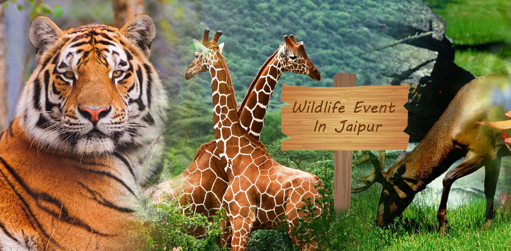wildlife event in Jaipur