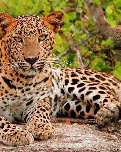Jhalana Safari