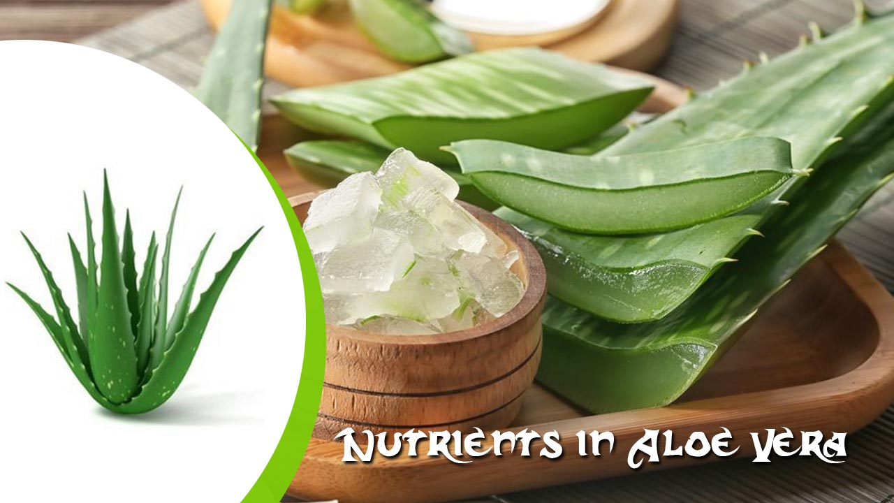 What are the Nutrients in Aloe Vera?
