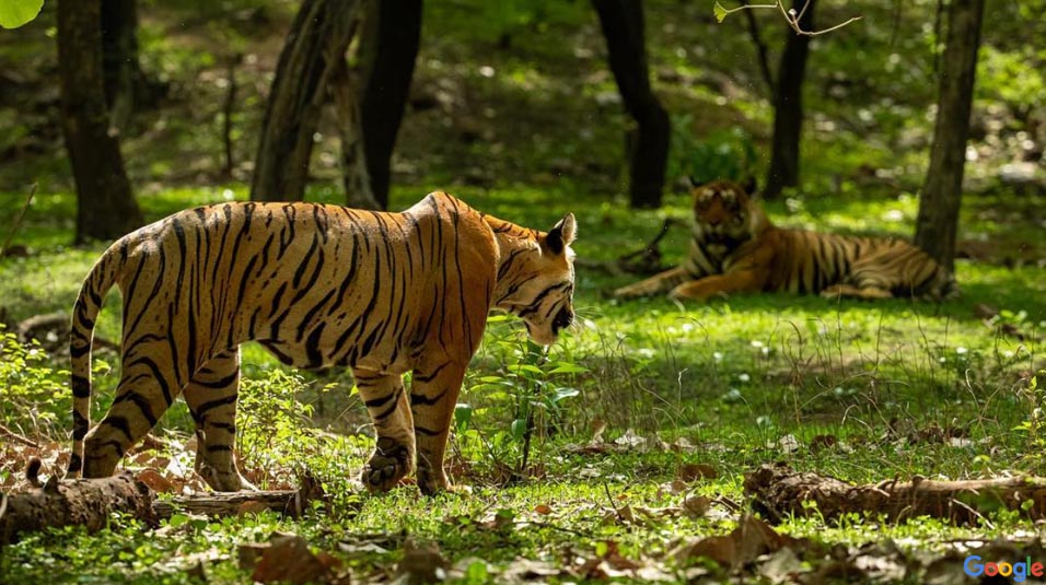 Sariska National Park Safari